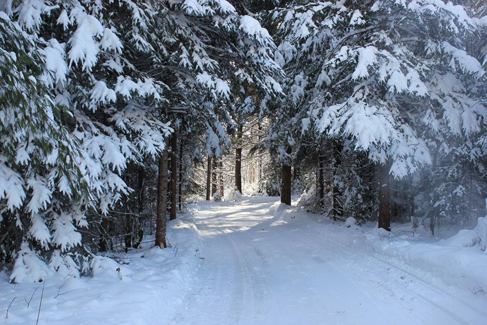 Patinoire en forêt « Au coeur du Lac des loups »